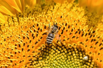 Bee working diligently all day to increase food supply.